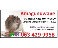 south African president use spiritual rats to acquire his wealth and money spells